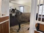 Paardenmatras stal zweden (6).jpg